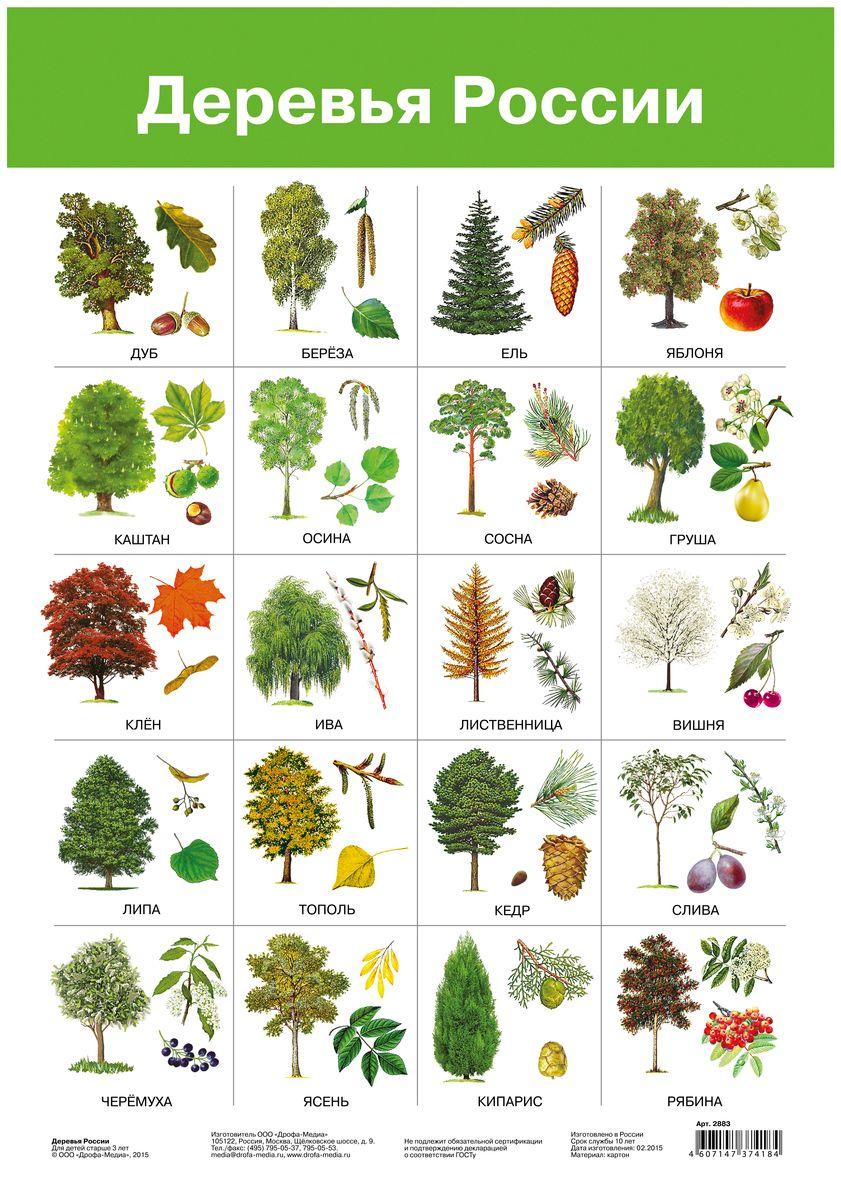 фанат картинки деревьев с названиями и цветами следует знать