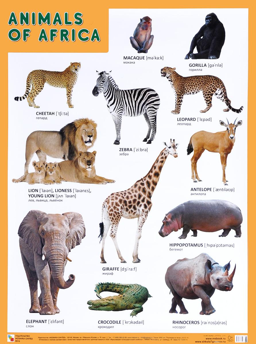 все животные мира список фото фото картину