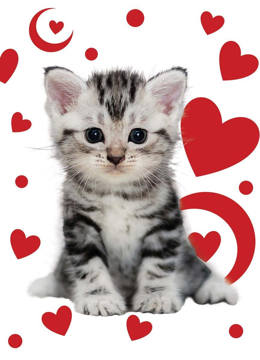 Милые картинки котик с сердечком которая осталась